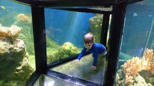 lapskalade maailmas akvaariumis