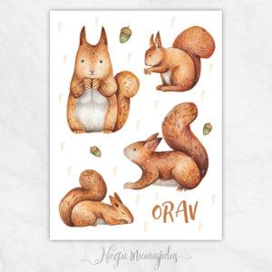 Oravad